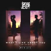 What I Like About You (Remixes) featuring Theresa Rex
