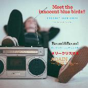 MEET THE INNOCENT BLUE BIRDS !!